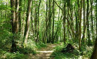 La start-up EcoTree est aujourd'hui propriétaire de 500 hectares de forêt.