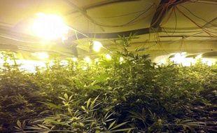 La villa était exclusivement dédiée à la culture du cannabis. AFP FRENCH CUSTOM