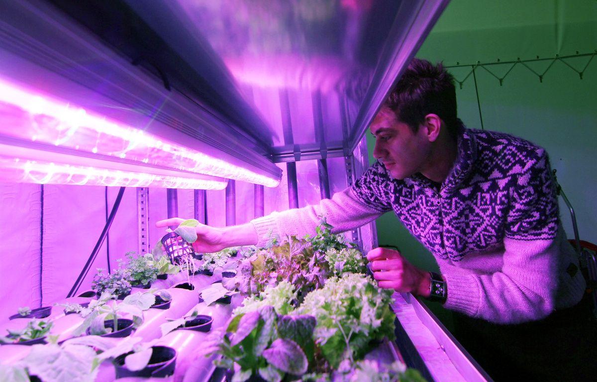 Fabien Persico a créé Urbanfarm, une société de fermes urbaines qui créé des potagers dans des containers. – C. Allain / APEI / 20 Minutes