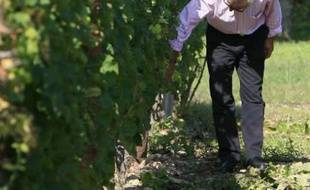 Le gel printanier, la maladie du mildiou et le manque de soleil en juillet devraient entraîner une chute de 40 % à 50 % des volumes de vin blanc pour les producteurs bordelais. Les viticulteurs gardent cependant espoir pour le rouge.