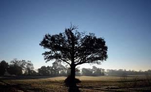 Plus un arbre est vieux, plus il capture du dioxyde de carbone dans l'atmosphère pour continuer à croître, selon une étude publiée mercredi et portant sur l'impact des forêts sur le réchauffement climatique.