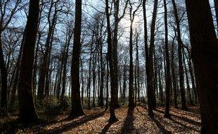 La forêt de Bercé, dans la Sarthe