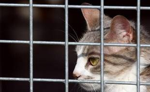 Un restaurateur a été condamné mardi par le tribunal correctionnel d'Angers à quatre mois de prison avec sursis pour avoir lancé un produit à base de soude sur un chat en cage qui l'exaspérait, a-t-on appris auprès d'une association de défense des animaux.