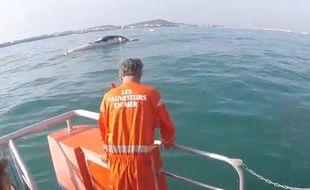 Le rorqual a été remorqué jusqu'au port du Cap d'Agde.