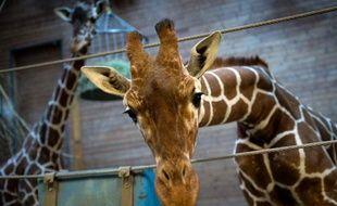 Entre 3 et 5.000 animaux sont euthanasiés en captivité chaque année en Europe, dans un souci de bonne gestion des espèces, a estimé une dirigeante de l'Association européenne des zoos et aquariums (EAZA), dans une interview diffusée jeudi par la BBC.