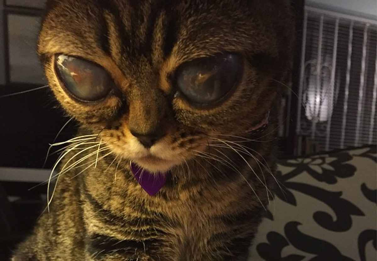 video matilda le chat aux yeux d extraterrestre. Black Bedroom Furniture Sets. Home Design Ideas