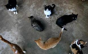 Plus de mille chats, sauvés de la casserole par des militants chinois de la cause animale, ont finalement été relâchés en pleine forêt par des autorités locales, au grand dam de leurs défenseurs, a rapporté un témoin à l'AFP.