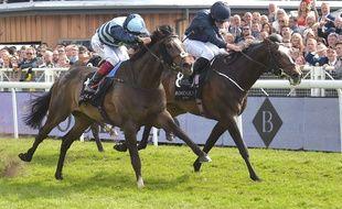 Alors, lequel de ces deux chevaux a l'air le plus en forme ?