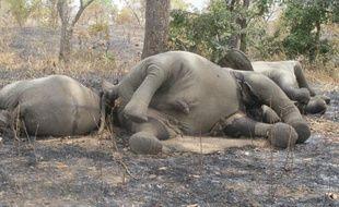 """La population d'éléphants du parc national de Bouba Ndjidda (nord du Cameroun) a diminué de plus de moitié en moins de trois mois à la suite de vastes opérations de braconnage et """"il faudra plus de 50 ans"""" pour qu'elle """"se reconstitue"""", a indiqué jeudi une ONG de défense des animaux."""
