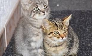 Des chatons. Illustration.
