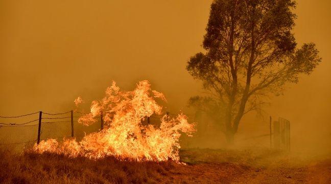 En Australie, des souris intoxiquées par les fumées des incendies