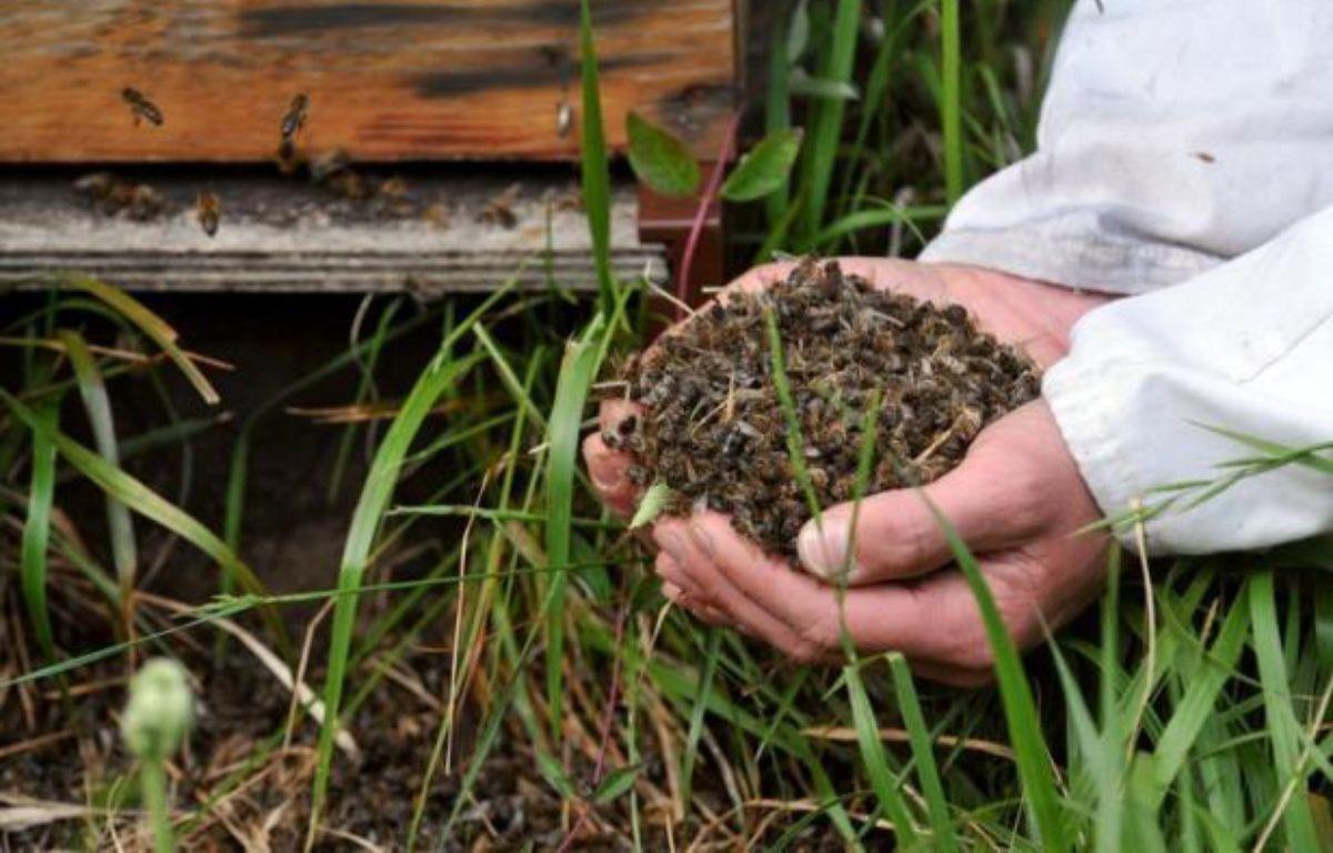 """L'Union nationale de l'Apiculture française a demandé jeudi le retrait du marché des pesticides épinglés par l'Autorité européenne de sécurité des aliments (EFSA), affirmant qu'il en allait de la """"survie des abeilles et des pollinisateurs sauvages"""" essentiels pour la production alimentaire. – Frank Perry afp.com"""
