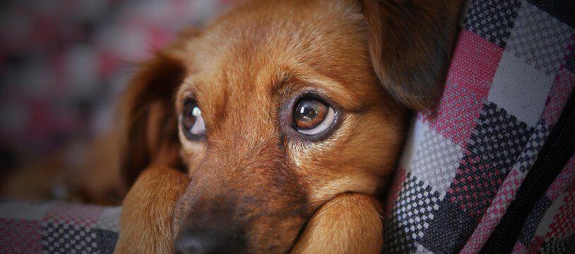 Les chiens de grande et moyenne seront désormais autorisés à voyager sur le réseau des transports en commun lyonnais (illustration).