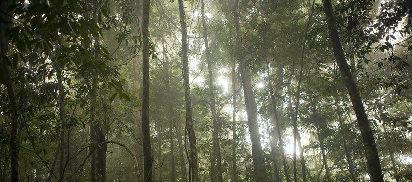 La forêt amazonienne, poumon de notre planète, est menacée par le réchauffement climatique. Et sa disparition entraînerait d'autres dégâts en chaîne.