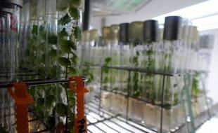 Faire coexister des cultures de plantes conventionnelles avec celles qui ont été génétiquement modifiées est possible, selon le Haut conseil des biotechnologies (HCB) moyennant plusieurs conditions au premier rang desquelles des distances d'isolement entre les champs.