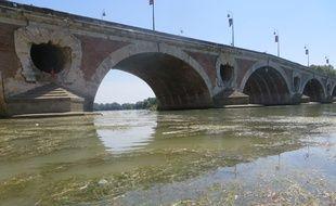 Les herbiers prolifèrent dans la partie toulousaine de la Garonne.