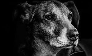 Un homme a été filmé en train de maltraiter son chien en pleine rue, avant que celui-ci ne succombe à ses blessures. (illustration)