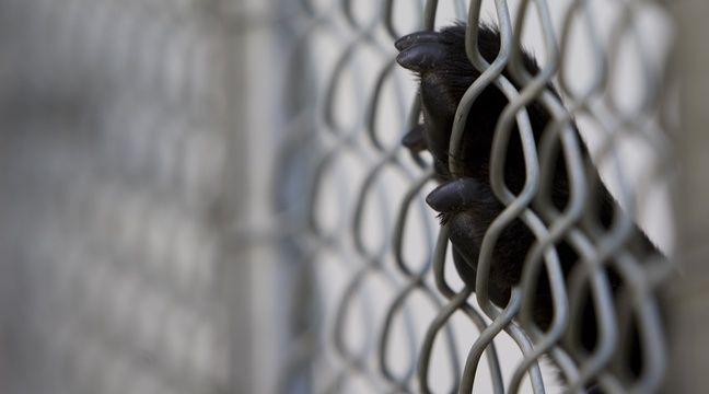 Vendée : Plus de 80 chiens retirés à un septuagénaire