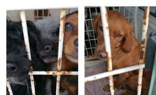 La SPA et la gendarmerie sont intervenus pour faire cesser les conditions de détention horrifiantes de ces animaux