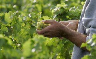 Les viticulteurs seront très recherchés cette année
