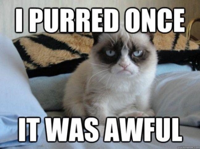 Mème de Grumpy cat.