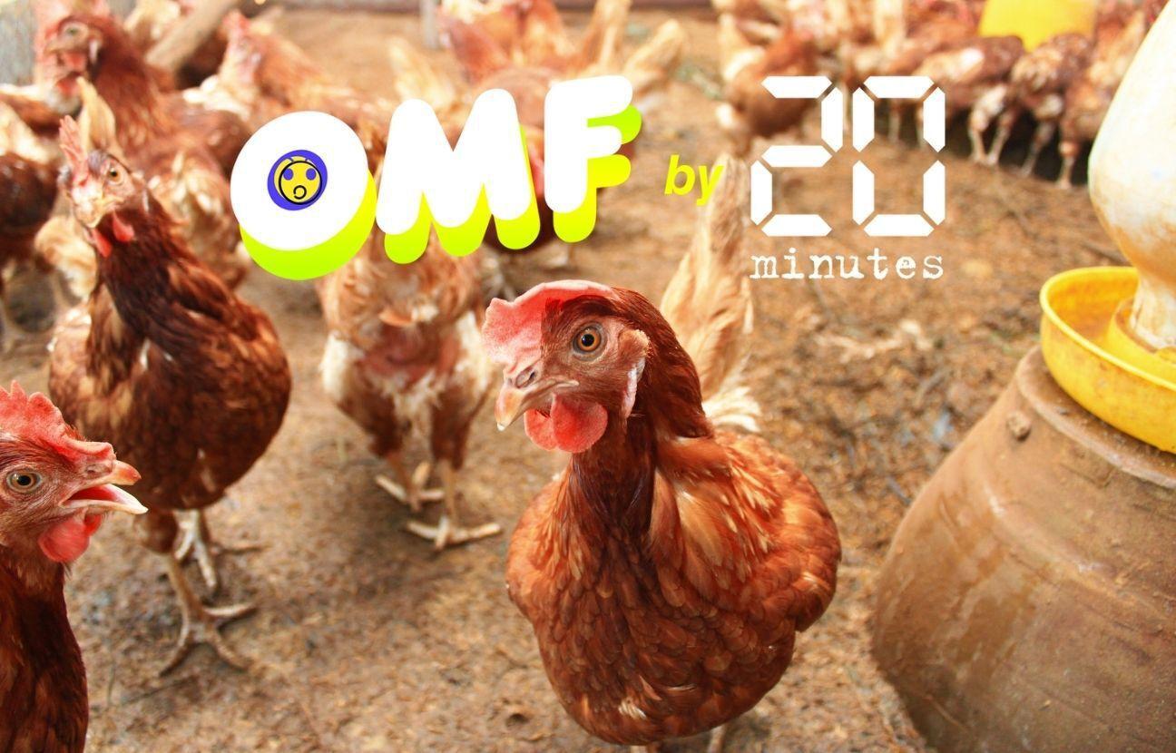 Le ministère de l'Agriculture et de l'Alimentation a t-il prévu une interdiction de l'abattage de volailles Halal à partir de juillet prochain ?
