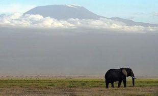 Un éléphant en Tanzanie (illustration).