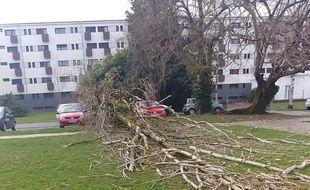 Un arbre tombé au Crous de Tarbes, lors du passage de la tempête Myriam, mardi.