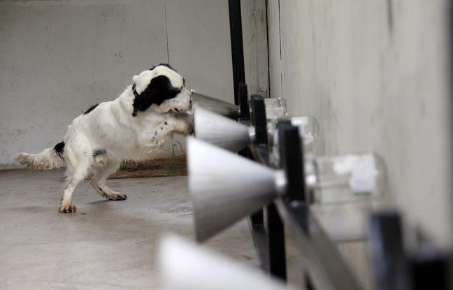 Des chiens sont entraînés dans le projet Kdog à détecter des cancers du sein.