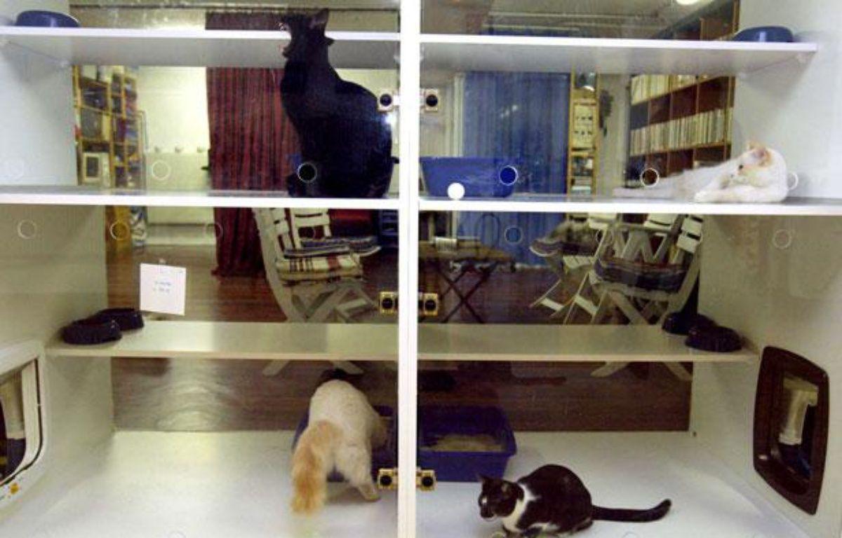 Une pension pour chats dans le 15eme arrondissement de Paris. – SIMON ISABELLE/SIPA
