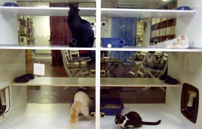 Une pension pour chats dans le 15eme arrondissement de Paris.