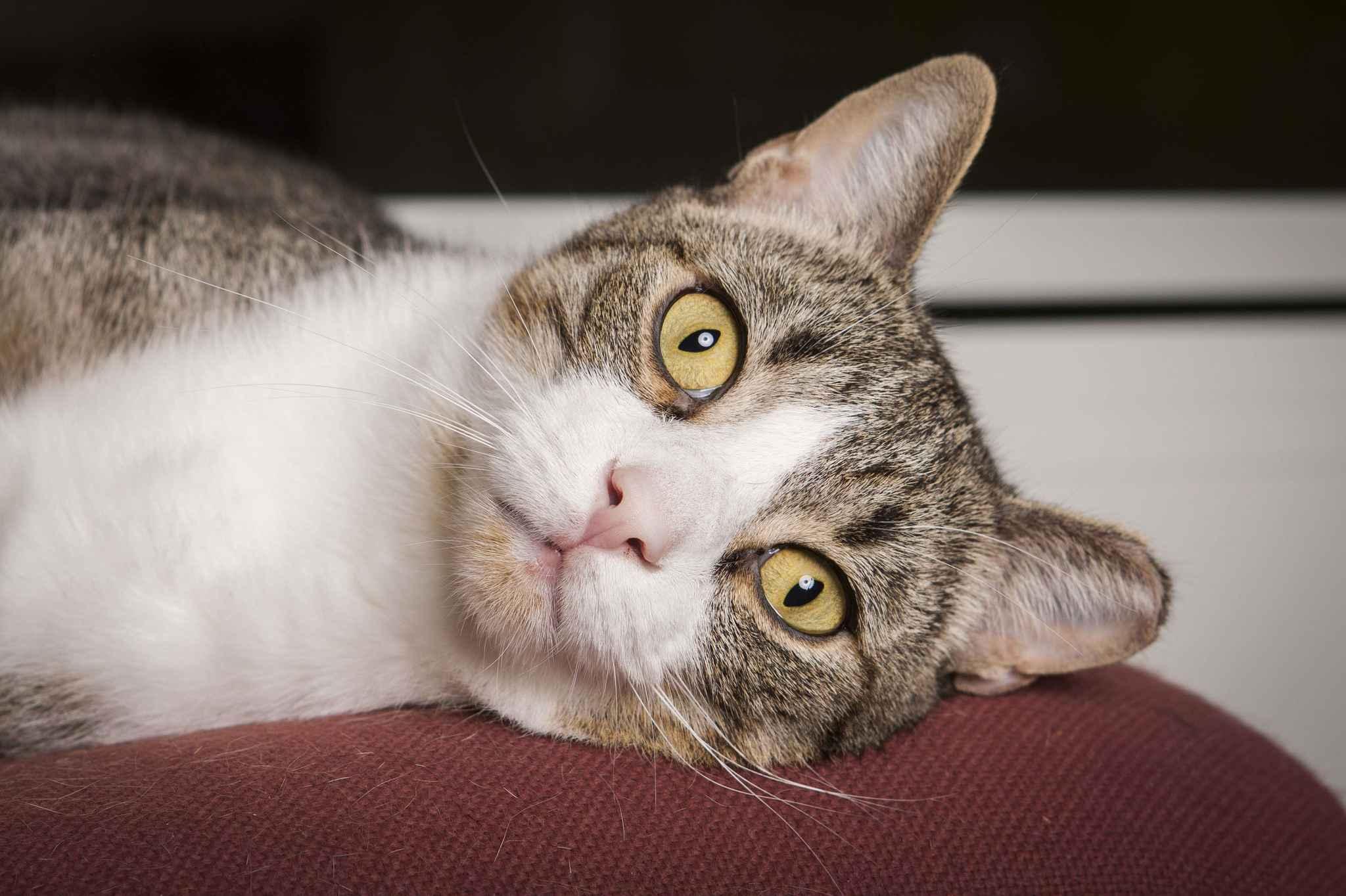 Vosges les chats d un petit village sont empoisonn s - Combien de temps un chat peut disparaitre ...