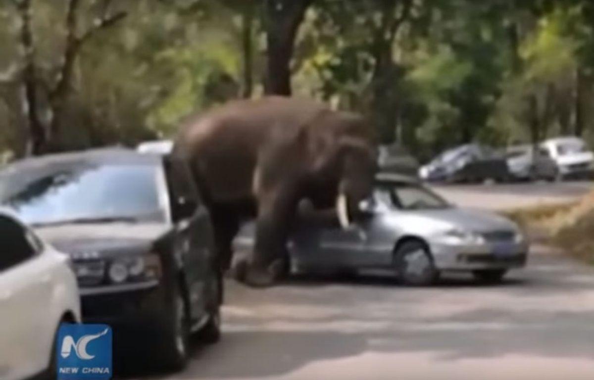 Vingt minutes auront suffi à cette éléphante pour endommager une quinzaine de voitures sur son passage. – New China TV / YouTube