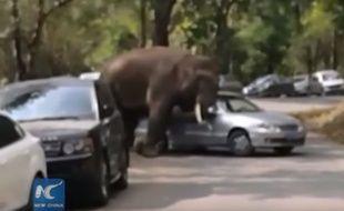 Vingt minutes auront suffi à cette éléphante pour endommager une quinzaine de voitures sur son passage.
