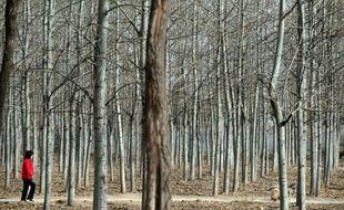 Un tiers des forêts chinoises restent menacées, en dépit de l'annonce par les autorités d'une suspension de l'abattage commercial d'arbres en milieu naturel