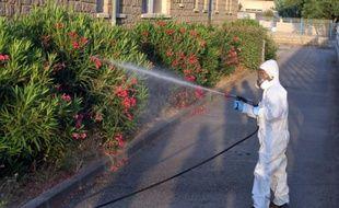 Opération de désinsectisation le 31 juillet 201 à Propriano où ont été découverts les nouveaux plants contaminés de Xylella Fastidiosa (Illustration)