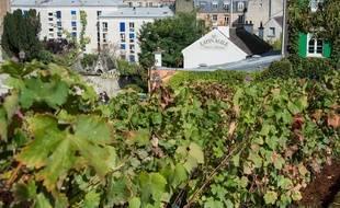 Vignes de Montmartre - Illustration.