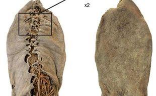 La plus vieille chaussure du monde a 5.500 ans