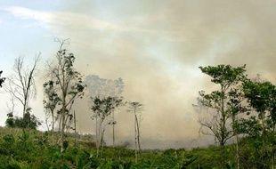 Déforestation en Indonésie par le feu.
