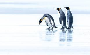 Le plus grand iceberg du monde menace des milliers de manchots en Atlantique Sud. (Illustration)