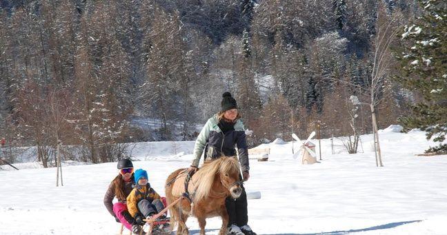 Le ski joëring en luge.