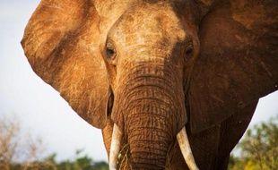 L'écosystème du Parc national kényan de Tsavo, principal sanctuaire d'éléphants au Kenya, compte à peine plus de 11.000 pachydermes, un nombre en baisse par rapport à 2011, selon les résultats d'un dernier recensement publiés lundi.
