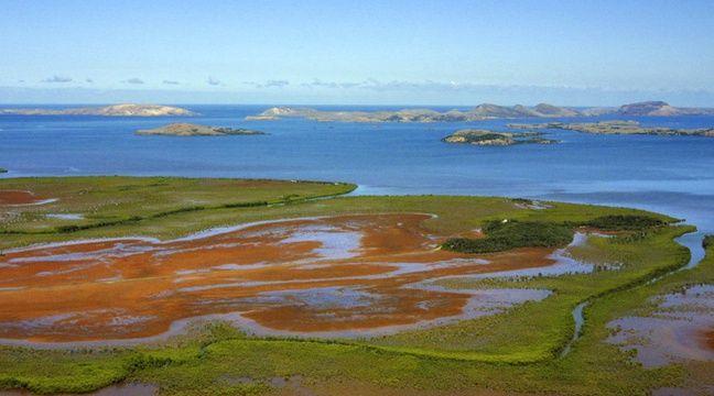 Replanter la mangrove pour protéger les côtes de la montée des eaux