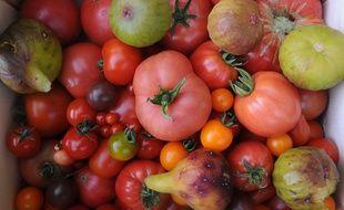 Des tomates, le 9 juillet 2014, dans la Sarthe