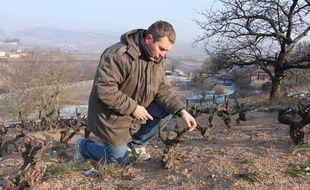 Pascal Aufranc, vigneron en Beaujolais, prend soin de ses vieilles vignes.