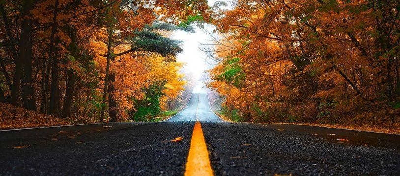 Une route bordée d'arbres. Illustration.