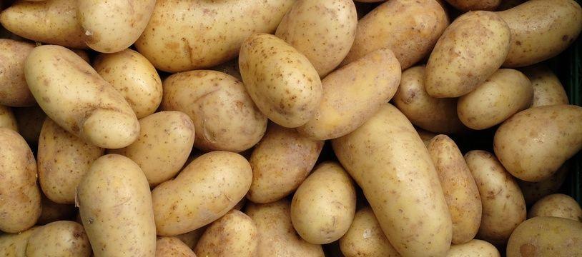 Illustration de pommes de terre.