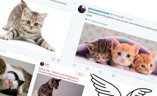 Capture d'écrans de tweets liés au hashtag #Barcelona, le 17 août 2017.