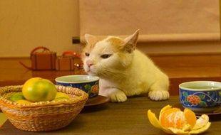 Capture d'écran du compte Twitter japonais Jalan mettant en scène un chat.