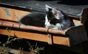 Illustration d'un chat de gouttière